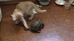 Котёнок и череПаша смотреть видео прикол - 1:35