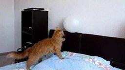 Смотреть Кот доигрался с шариком