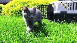 Смотреть Котёнок впервые на улице