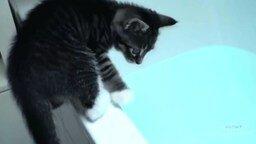 Смотреть Кошки, любящие воду