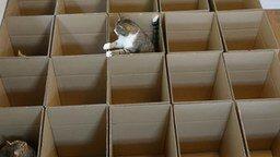 Картонный рай для кошек смотреть видео прикол - 2:56