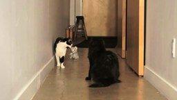 Два кота в доме смотреть видео прикол - 1:39