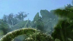 Смотреть Семяизвержение огурца