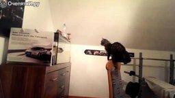 Безжалостный охотник на рыбок смотреть видео прикол - 0:16