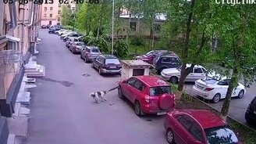 Смотреть Собака грызёт машину