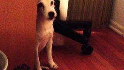 Смотреть Очень стыдливая собака