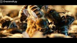 Смотреть Как изменится мир, если исчезнут пчёлы?