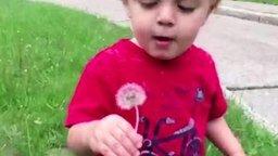 Смотреть Дети пробуют на вкус одуванчик