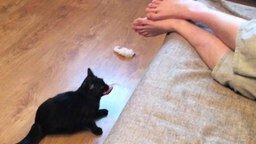 Смотреть Кошка-тренога носит апорт