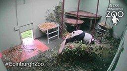 Смотреть Один день из жизни панды