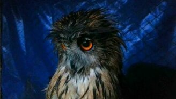 Смотреть Смешная сова угукает