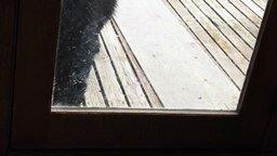 Смотреть Кошка испугала медведя