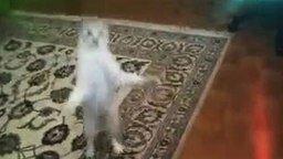 Кот прыгун смотреть видео прикол - 0:23