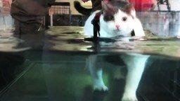Смотреть Кошачьи приколы с озвучкой