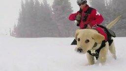 Смотреть Зимняя прогулка щенка