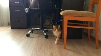 Охота домашнего кота смотреть видео прикол - 0:41