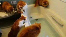 Смотреть Рыжая тусовка в ванной