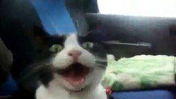 Смотреть Кошка и звук гоночного мотора