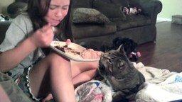 Котейки-воришки смотреть видео прикол - 3:01