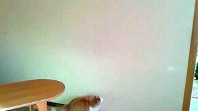 Смотреть Худей, котик, худей!