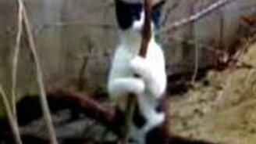 Кошка стриптизерша