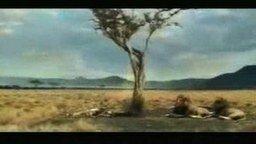 Смотреть Антилопа блондинка