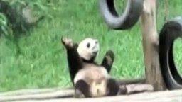 Танец панды смотреть видео прикол - 0:18