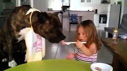 Смотреть Девочка потчует пса