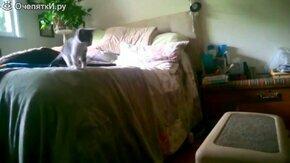 Смотреть Короткие приколы с кошками