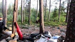 Как спугнуть медведя смотреть видео прикол - 0:33