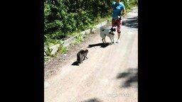 Смотреть Кот-ниндзя защищает хозяев от собаки