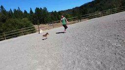 Самая маленькая лошадка смотреть видео прикол - 1:48