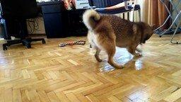 Смотреть Собака моет пол