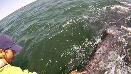 Смотреть Погладили китёнка