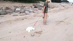 Смотреть Блондинка выгуливает кошку