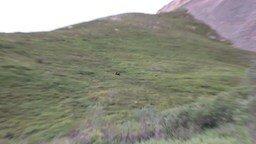 Медведи с горы катаются смотреть видео прикол - 1:33