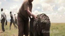 Смотреть Спасаем животных