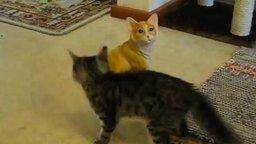Смотреть Котёнок против неживого врага