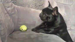 Смотреть Самые забавные собаки в сборнике
