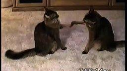 Смотреть Упрямые кошачьи ладушки