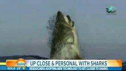 Акула, шокировавшая всех смотреть видео прикол - 0:37