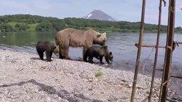 Смотреть Медвежья рыбалка на Курильском озере