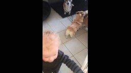 Малыш-помощник - радость маме! смотреть видео прикол - 0:33