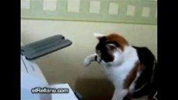 Кошка секретарша смотреть видео прикол - 0:46