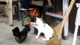 Курьёзы с домашними котами смотреть видео прикол - 4:09