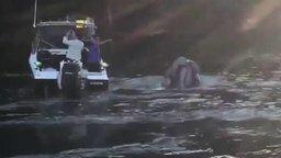 Смотреть Рыбаки помогли киту