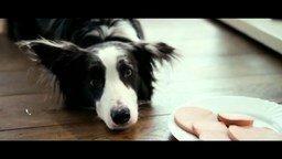Смотреть Валентин Гафт - Пёс
