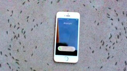 Смотреть Муравьи вокруг мобильника
