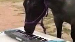 Смотреть Лошадь играет на пианино