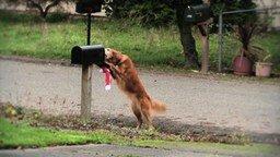 Собаки-помощники смотреть видео прикол - 1:38